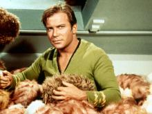 Captain Kirk with tribbles